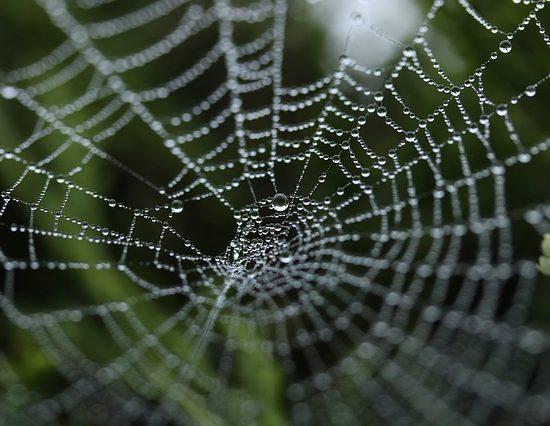 loyalita%cc%88tsfall-spider-web